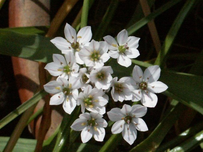 Snowdrop-flowers-2-675x506 3 Tips to Help You Avoid Bankruptcy