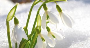 Top 10 Flowers That Bloom in Winter