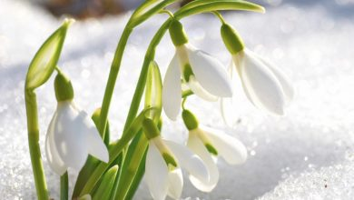 Photo of Top 10 Flowers That Bloom in Winter