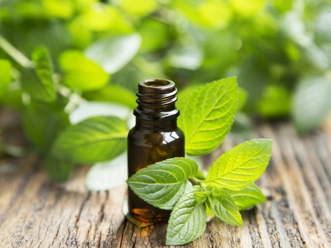 peppermint-oil-mint-leaves.jpg.838x0_q80-675x505 Protecting the Pantry - 6 Tips for Keeping Your Food Safe from Pests This Season