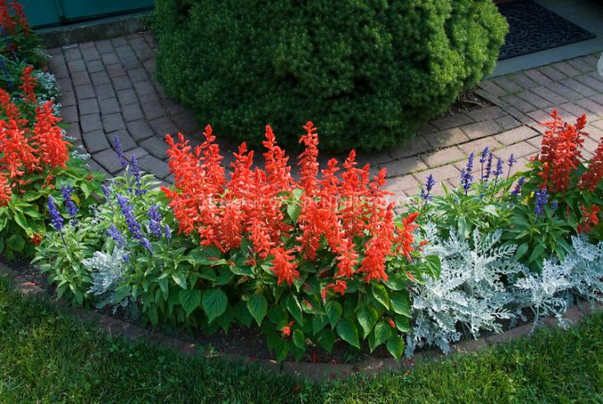 Plants-and-flowers-675x453 Exclusive Tips To Transform Your Garden on a Budget