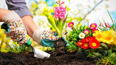 Photo of Exclusive Tips To Transform Your Garden on a Budget