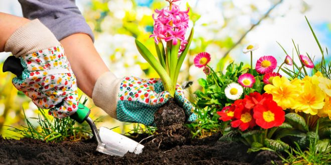 Exclusive Tips To Transform Your Garden On A Budget