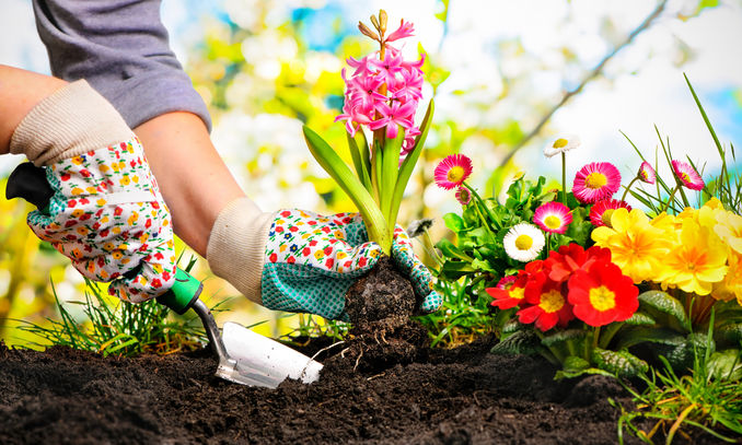 Transform-Your-Garden-on-a-Budget 10 Main Steps to Become a Fashion Journalist and Start Your Business
