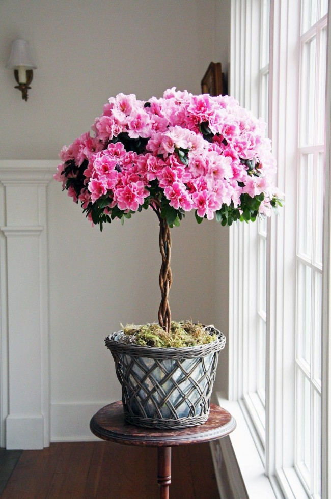 Azalea-Christmas-Tree-3 Top 10 Best Selling Christmas Products in 2020