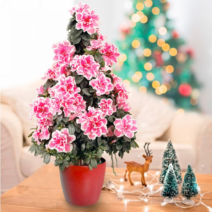 Azalea-Christmas-Tree-675x675 Top 10 Best Selling Christmas Products in 2018