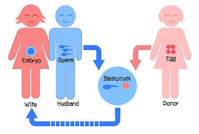 donor-egg-IVF-675x455 Facing Infertility Feelings: Choosing Frozen Donor Egg IVF
