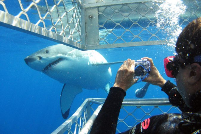 Shark-cage-diving-Eyre-Peninsula-675x450 10 Must-Have Christmas Gift Ideas for Men In 2020