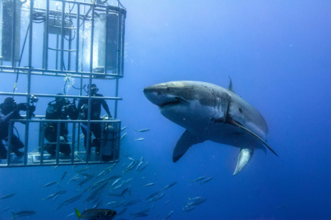 Shark-cage-diving-white-shark-south-africa-675x450 Top 10 Must-Have Men Christmas Gifts In 2018