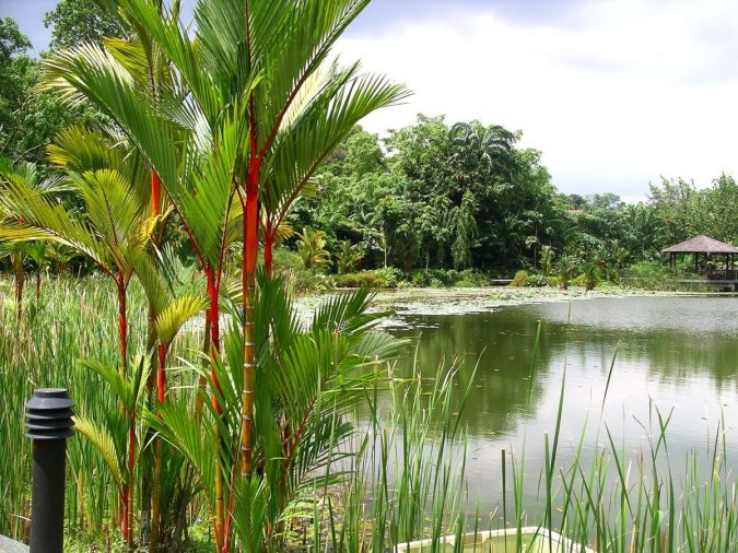 Symphony-Lake-Singapore-Botanic-Gardens-Asian-travel-destinations-675x506 The 12 Most Relaxing and Meditative Holiday Destinations in Asia