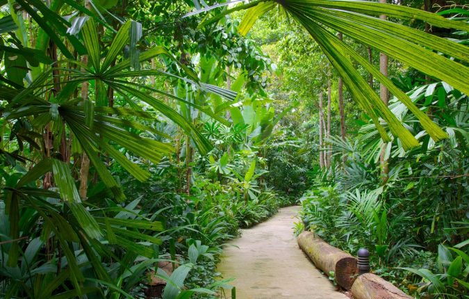 The-Bukit-Timah-Nature-Reserve-Asian-travel-destinations-2-1-675x430 The 12 Most Relaxing and Meditative Holiday Destinations in Asia