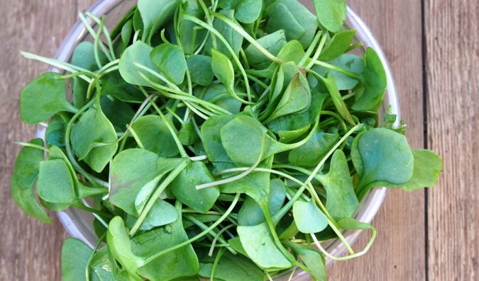 watercress-plant-1-675x397 Top 10 Best Hair Masks for Color Treated Hair