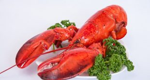 Top 10 Surprising Health Benefits of Lobster