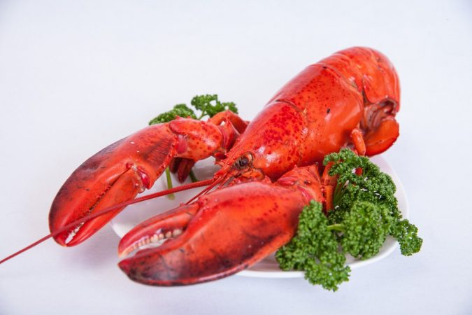 lobster-4-2-675x450 Top 10 Surprising Health Benefits of Lobster