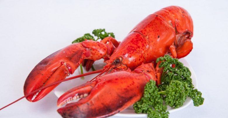 Photo of Top 10 Surprising Health Benefits of Lobster