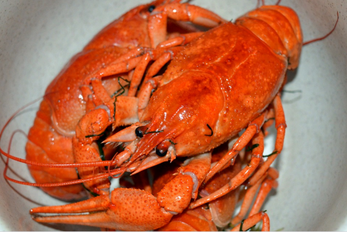 lobsters-2-675x452 Top 10 Surprising Health Benefits of Lobster