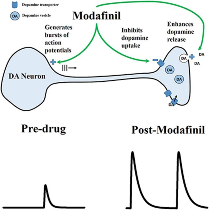 modafinil-dopamine-675x681 What You Should Know About Modafinil