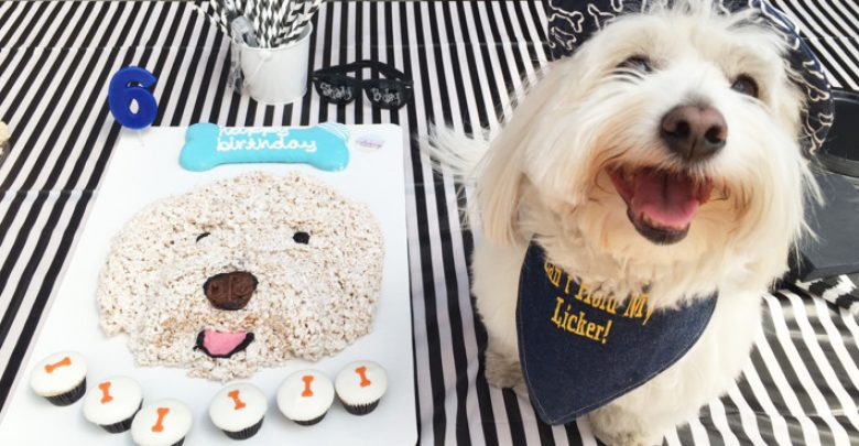 Photo of 7 Fun Ways To Celebrate Your Dog's Birthday