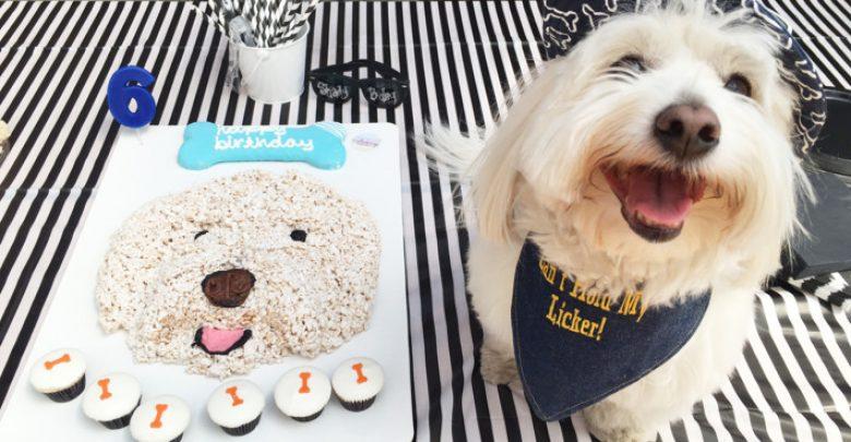 Photo of 7 Fun Ways To Celebrate Your Dog's Birthday