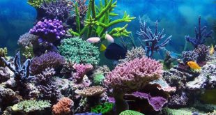 How Does a Coral Reef Ecosystem Work?
