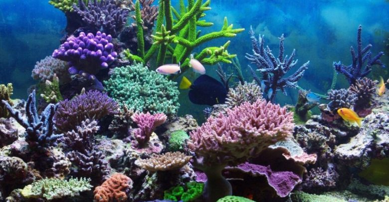 Photo of How Does a Coral Reef Ecosystem Work?