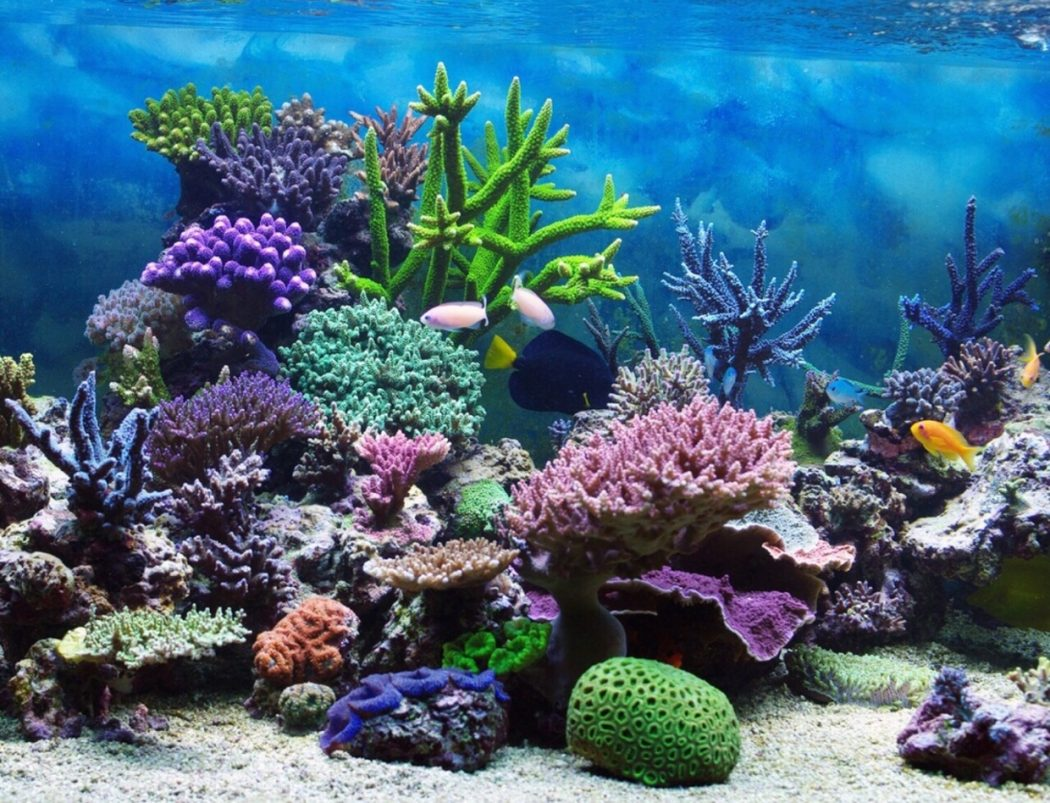Coral-Reef-Ecosystem 3 Tips to Help You Avoid Bankruptcy