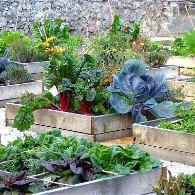 Design-A-Mini-Vegetable-Garden How To Revamp Your Garden In A Whole New Way