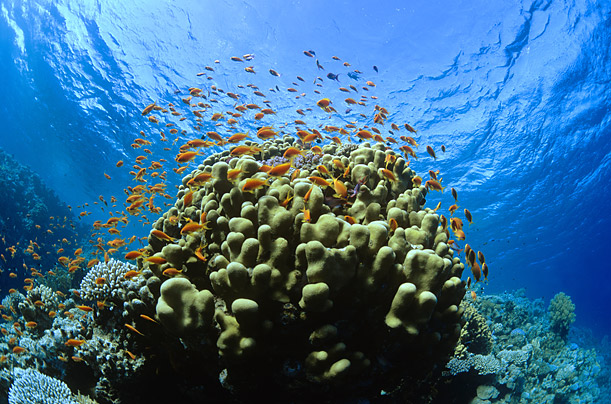 Picture_1_coral-reefs How Does a Coral Reef Ecosystem Work?