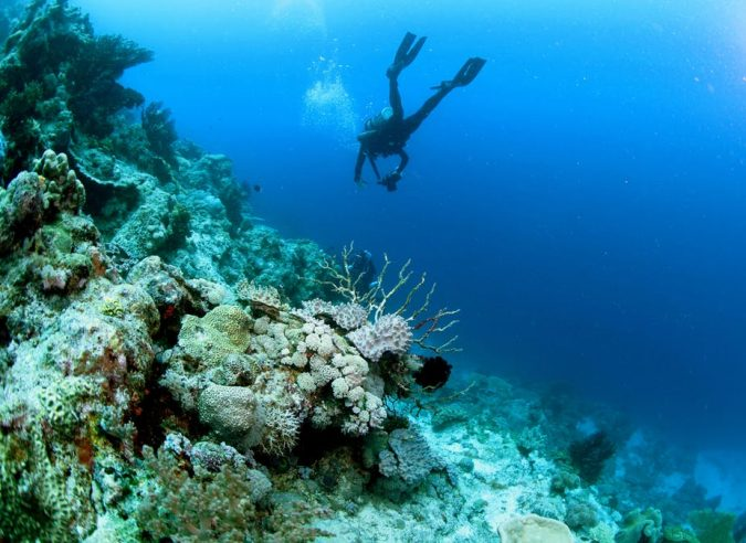 Picture_2_bleached-coral-reefs-675x492 How Does a Coral Reef Ecosystem Work?
