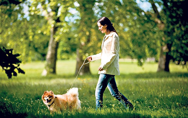 dogwalking_2492971b 5 Benefits of Renting a Private Jet