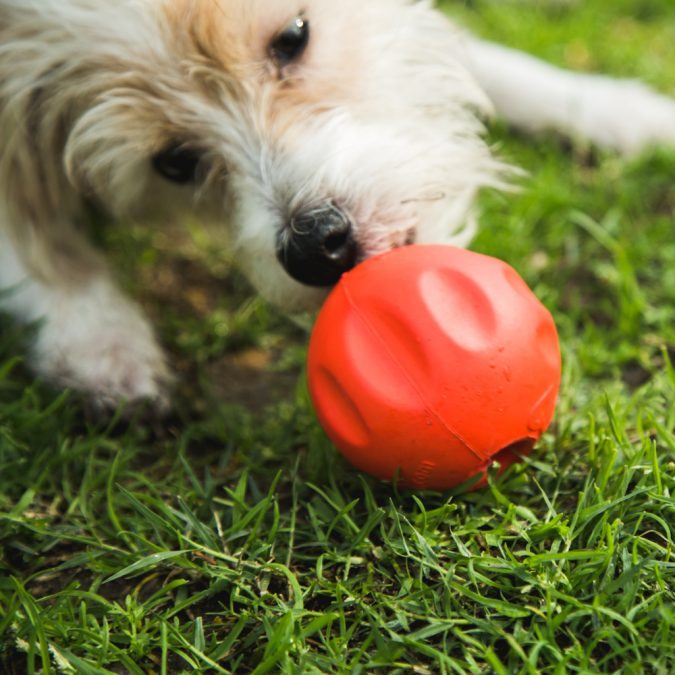 find-it-games-675x675 7 Fun Ways To Celebrate Your Dog's Birthday