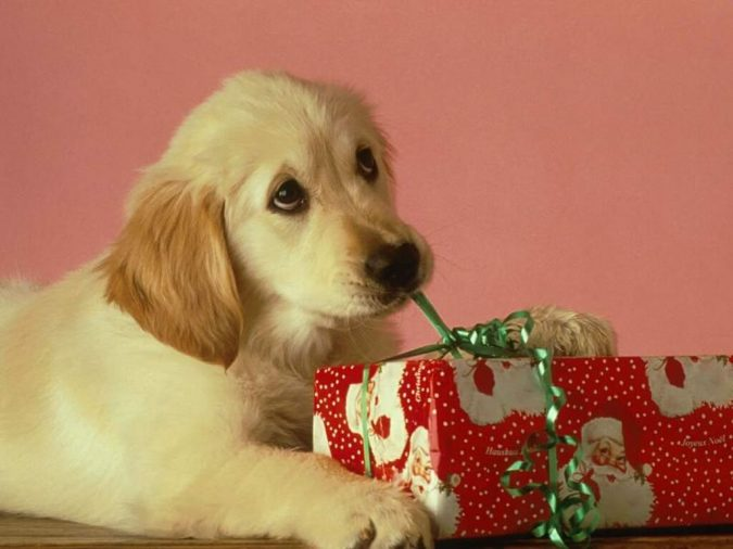 labrador-puppy-with-xmas-present-675x506 7 Fun Ways To Celebrate Your Dog's Birthday