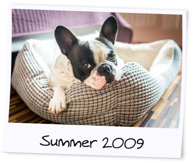photo-dog-675x570 7 Fun Ways To Celebrate Your Dog's Birthday