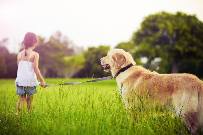 strolling-with-a-dog-675x450 7 Fun Ways To Celebrate Your Dog's Birthday