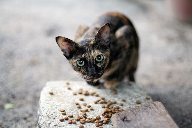 Feed-Stray-Animals Top 10 Ways to Make a Difference in the World