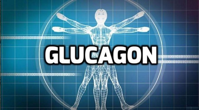 Glucagon-675x375 Top 10 Hormones That Help You Lose Weight