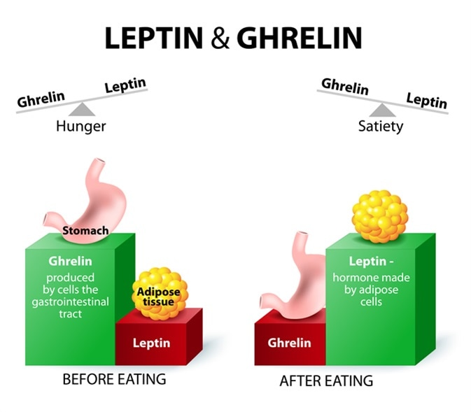 Leptin-1 Top 10 Hormones That Help You Lose Weight