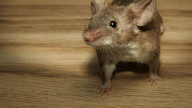 Photo of 7 Problems You Can Get From House Mice