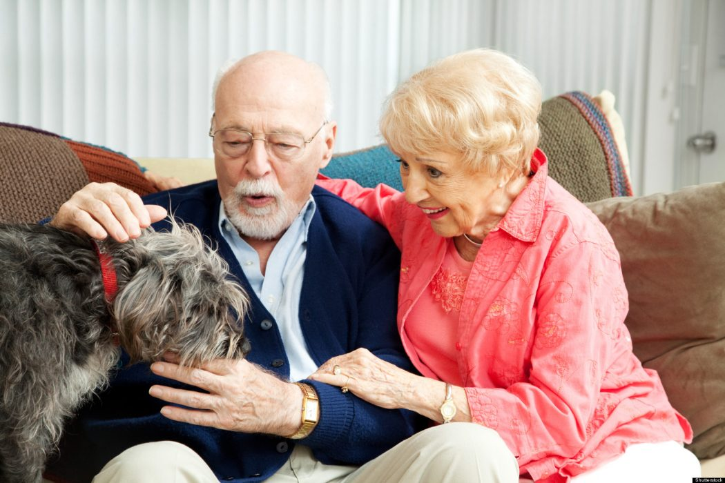 Bed-for-Aging-Pets 3 Tips to Help You Avoid Bankruptcy