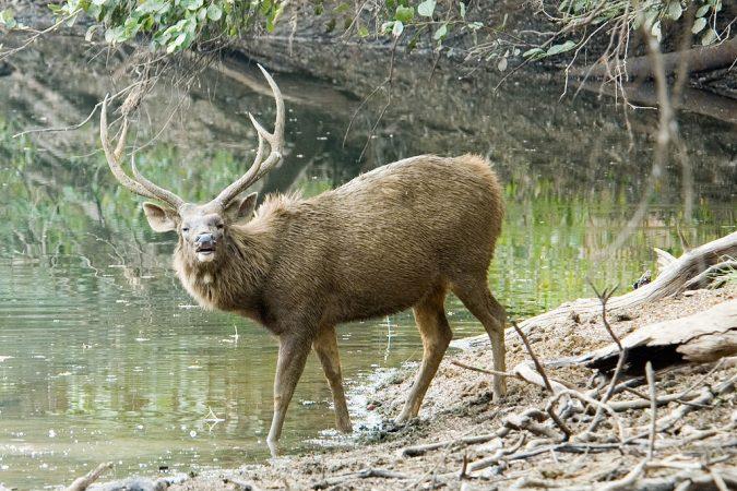 Sambar-deer-Wildlife-Sanctuary-675x450 10 Charming Sites to Visit in Lonavala, India