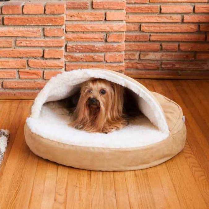 The-accessibility-675x675 Buying Tips on How to Choose a Comfortable Bed for Aging Pets