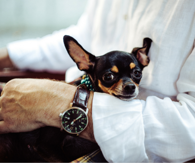 Miniature-Pinscher-dog-2-675x566 What is the Perfect Dog for Small Living Spaces?
