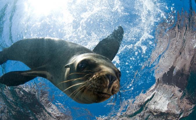 sea-of-cortez-557585-675x414 World's Rarest Wildlife Places