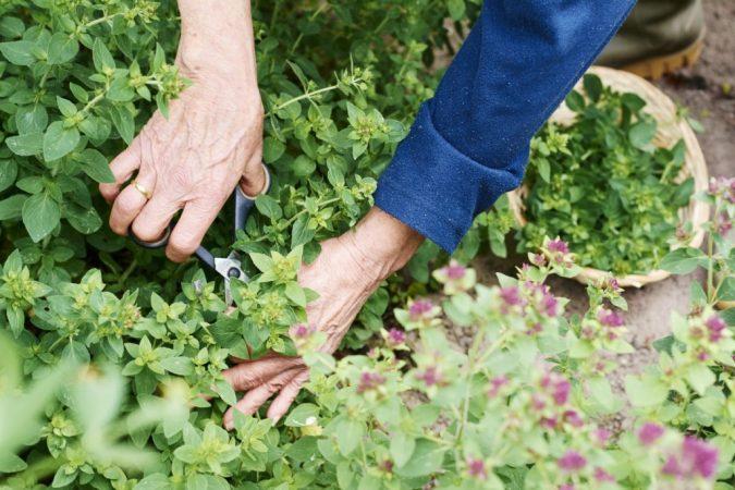 home-garden-cosecha_menta-1024x682-675x450 +7 Ideas to Revamp Your Garden for 2021
