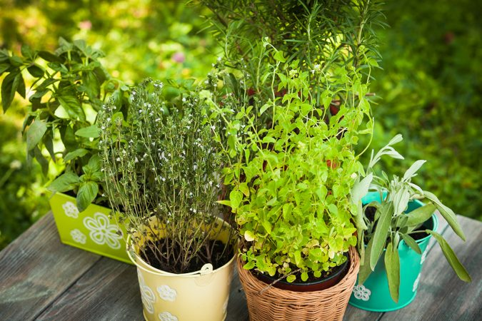 home-garden-herbs-675x450 8 Ideas to Revamp Your Garden for 2019