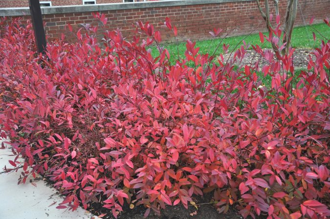 home-garden-native-shrubs-for-fall-virginiasweetspireumd-675x448 +7 Ideas to Revamp Your Garden for 2020