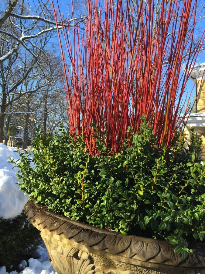 home-garden-winter-container-675x900 8 Ideas to Revamp Your Garden for 2019