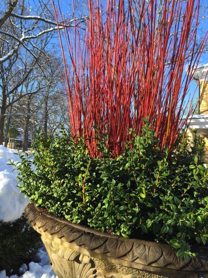 home-garden-winter-container-675x900 +7 Ideas to Revamp Your Garden for 2021