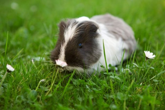 home-garden-with-guinea-pig-675x450 +7 Ideas to Revamp Your Garden for 2020
