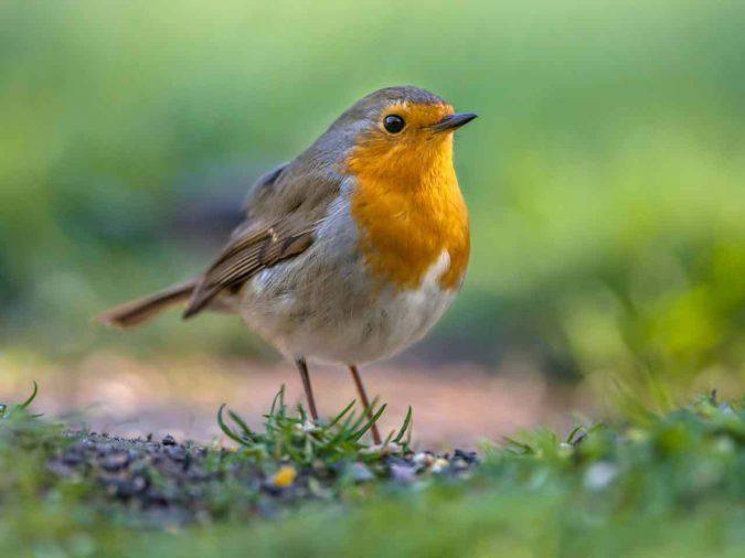 wildlife-friendly-garden-675x506 +7 Ideas to Revamp Your Garden for 2021
